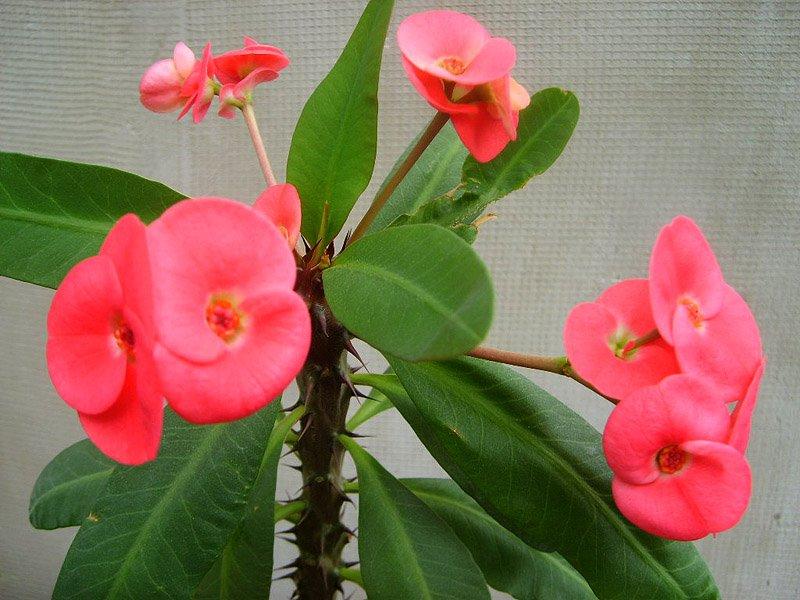 Неприхотливые комнатные растения: названия и фото