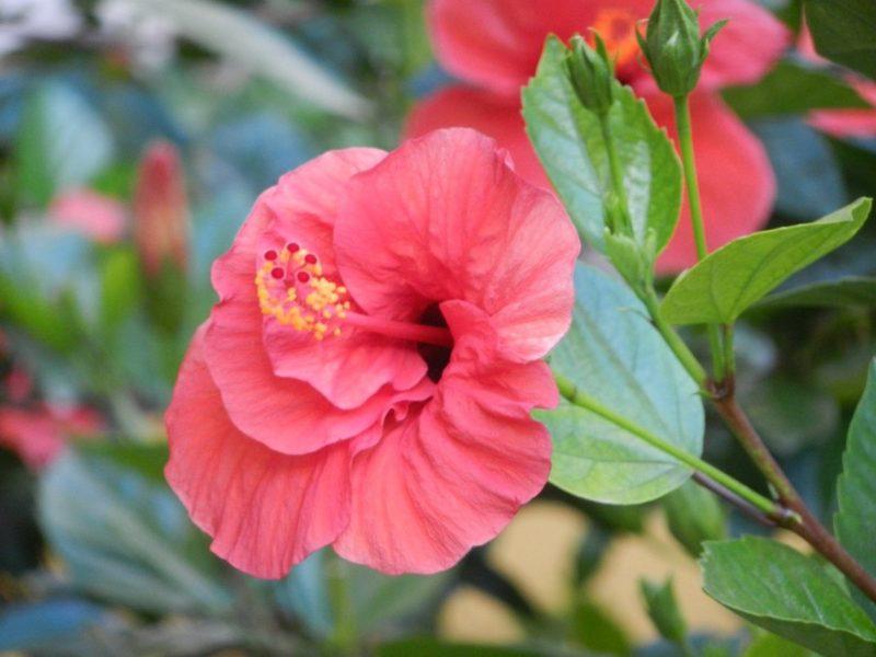 6 растений, которые по приметам могут вернуть счастье в семью