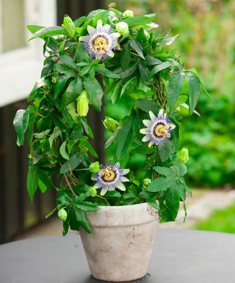 7 быстрорастущих растений, которые превратят дом в живой уголок в короткие сроки