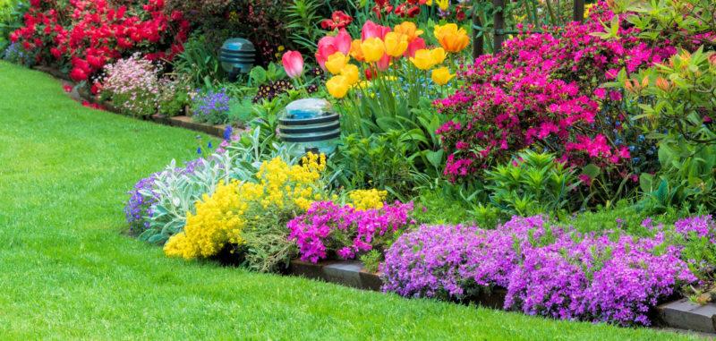 Тенелюбивые многолетние и однолетние цветы в саду, цветущие все лето