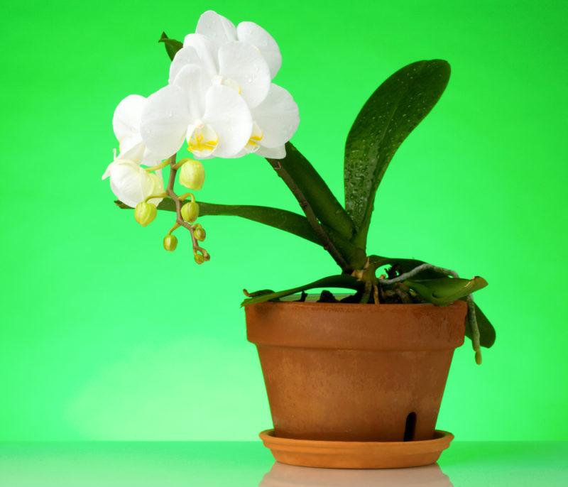 Как после покупки ухаживать за орхидеей в домашних условиях
