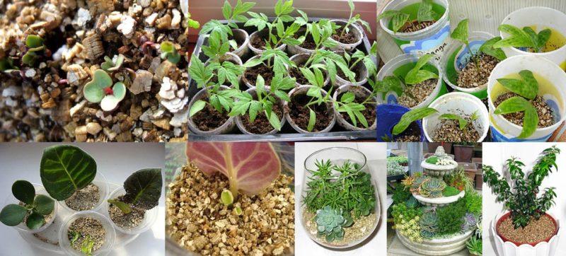 Что такое вермикулит и как его применять для растений