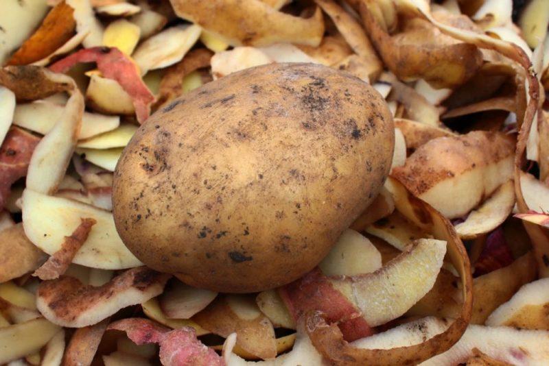 Отличное и копеечное средство, повышающее Урожай черной Смородины в несколько Раз