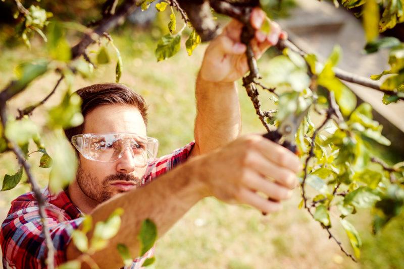 Осенняя обработка плодовых деревьев: как к ней подготовиться и какие средства использовать