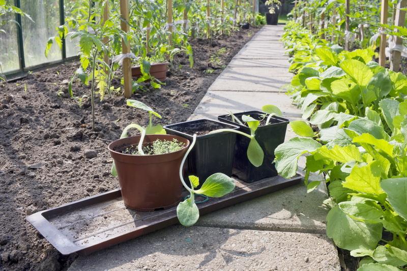Что стоит класть в лунку для богатого урожая огурцов — делюсь личным опытом