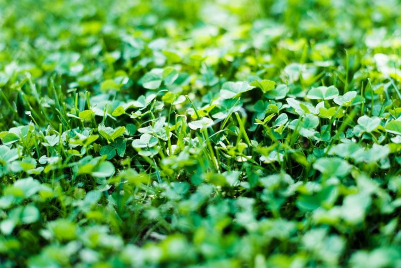 Богатый мир растений-предшественников: в каких сидератах нуждается почва