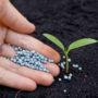Фосфорные удобрения в жизни растений